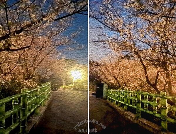 Taiwan Travel Spring Cherry Flowers Tamsui photography Romanticism 臺灣旅行 淡水天元宮 山寺櫻花 花卉攝影 浪漫主義 Yalan雅嵐 黑攝會